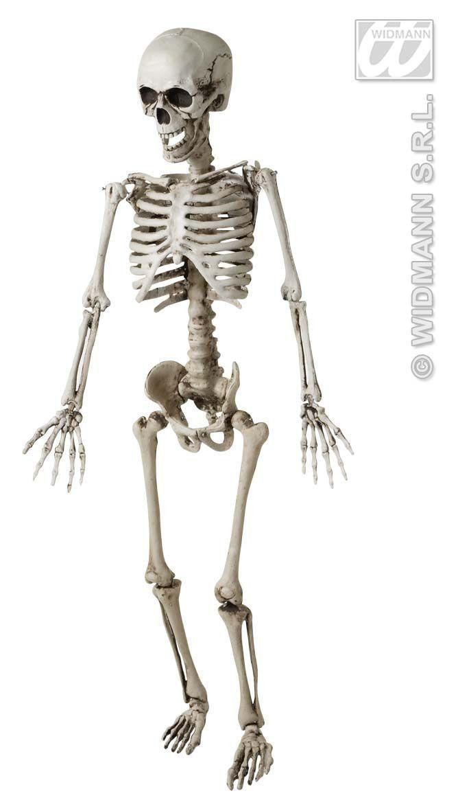 Skelet, Luxe Uitvoering 120cm