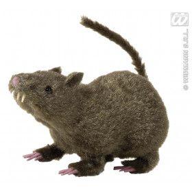 Harige Rat, 21 Centimeter