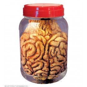 Laboratoriumpot Met Hersenen