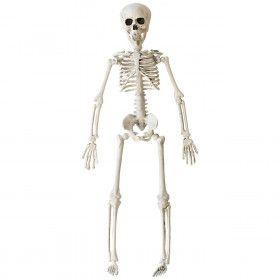 Bungelend Skelet 40 Centimeter