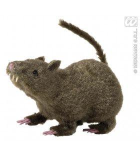 Harige Rat, 21cm