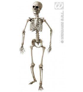 Skelet, Luxe Uitvoering 160cm