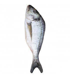 Vis Op Het Droge 55 Centimeter